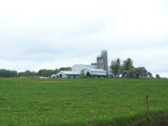 A farm with black-and-white cows