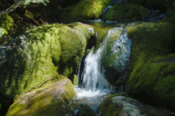 stream through mossy rocks